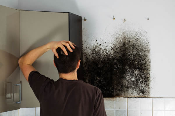 discovering mould